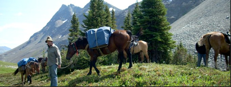 horse packing alberta